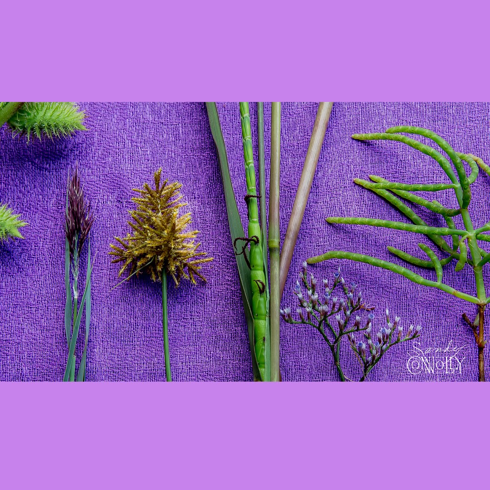 Cocklebur, Phragmites, Umbrella Sedge, Gamma Grass, Sea Lavendar, and Slender Glasswort